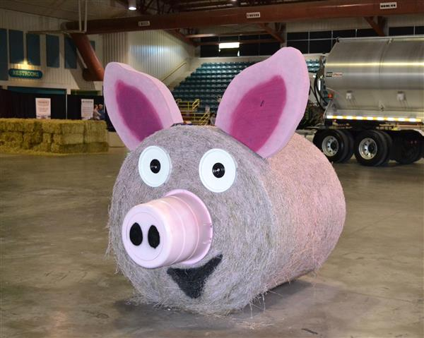 A big pig made from a round hay bale painted pink complete with nose, ears, eyes and tail